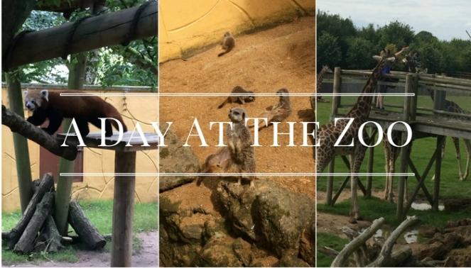 Zoo Header 2