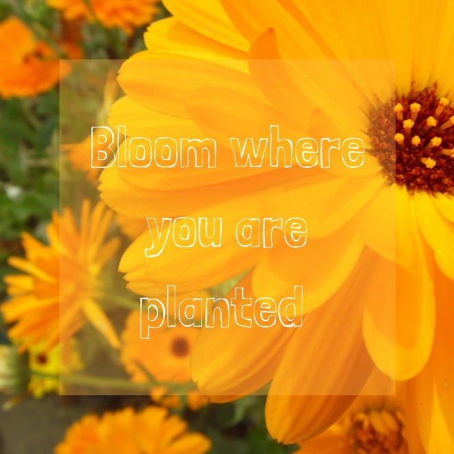 Bloom where you are planted.jpg